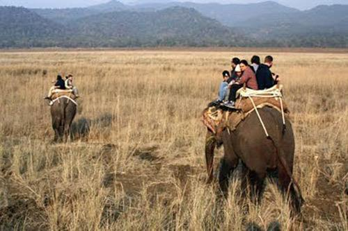Adventure safari in Corbett