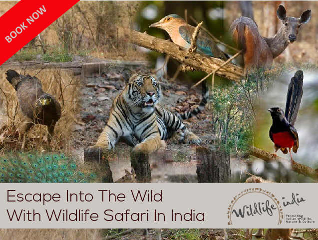 Best Widlife Tours in India